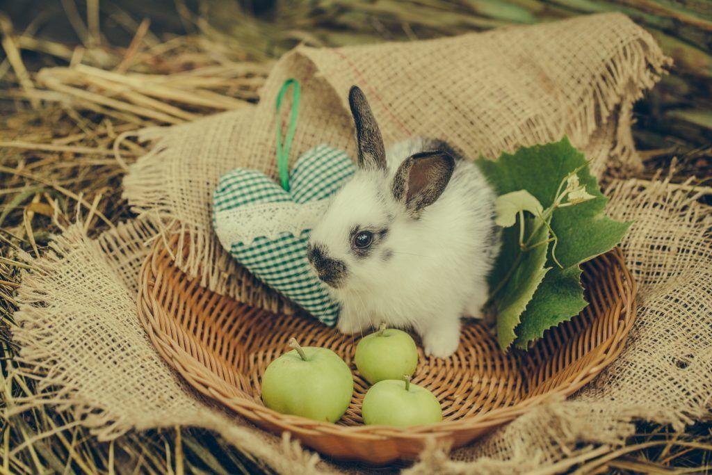 Чем кормить маленьких крольчат: рацион питания