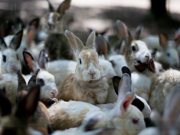 Процесс размножения кроликов