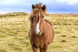Размножение лошадей