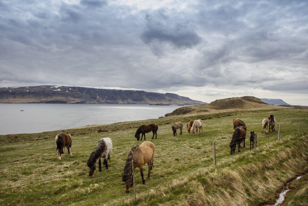 Разведение лошадей как бизнес: от А до Я