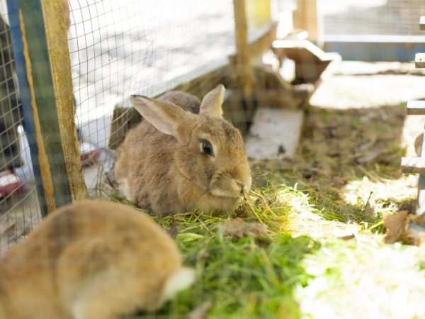 Зеленый корм для кролика