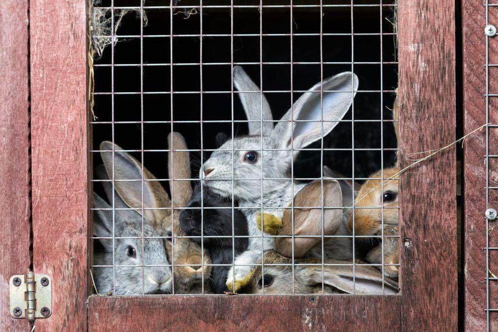 Как разводить кроликов на продажу с чего начать