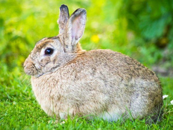 Разведение кроликов по методу Михайлова