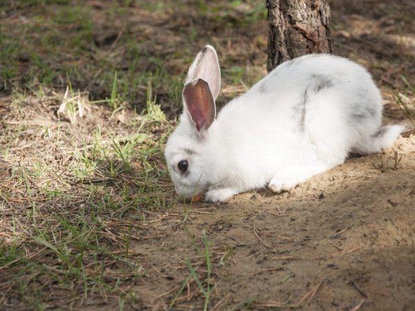 Разведение кроликов в яме