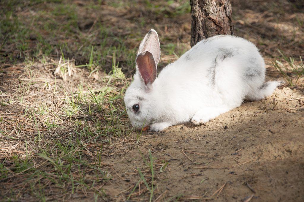 Разведение кроликов в яме и их дальнейшее содержание