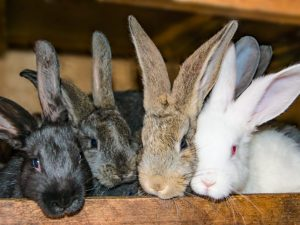 Подготовка крольчихи к родам