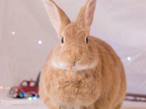 Шеды для кроликов своими руками