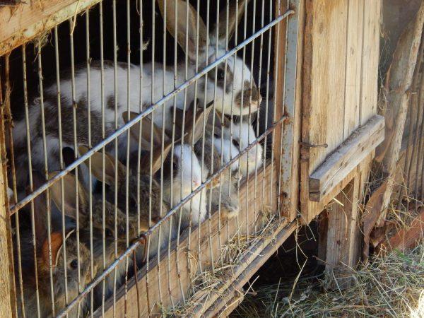 Выбор помещения для кроликов