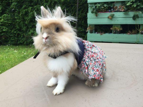 Шлейка для кролика своими руками