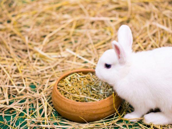 Правила кормления кроликов