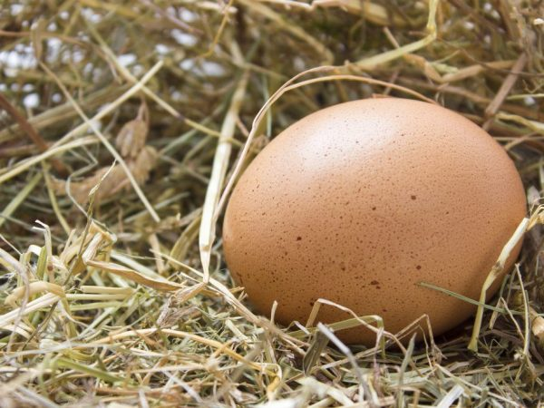 Сколько весит куриное яйцо без скорлупы