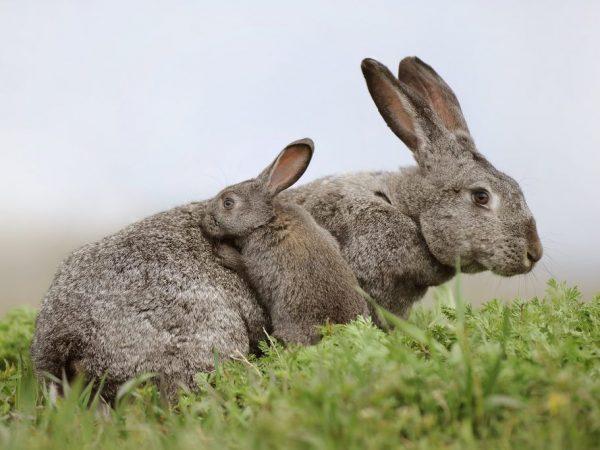 Домик для крольчихи