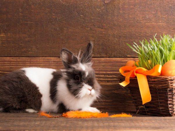 Сколько лет живут кролики