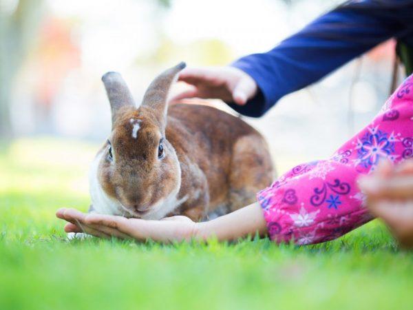 Дикий кролик в домашних условиях может прожить до 5 лет