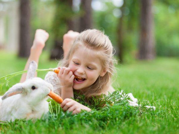 Сочный корм для кролика