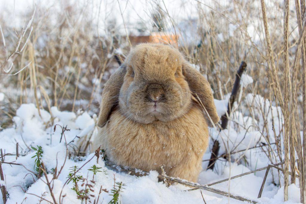 Правила содержания кроликов зимой на улице