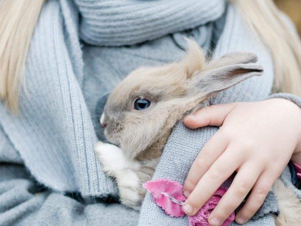 Причины, по которым кролик не пьет