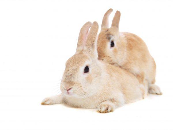 Как рождаются кролики видео