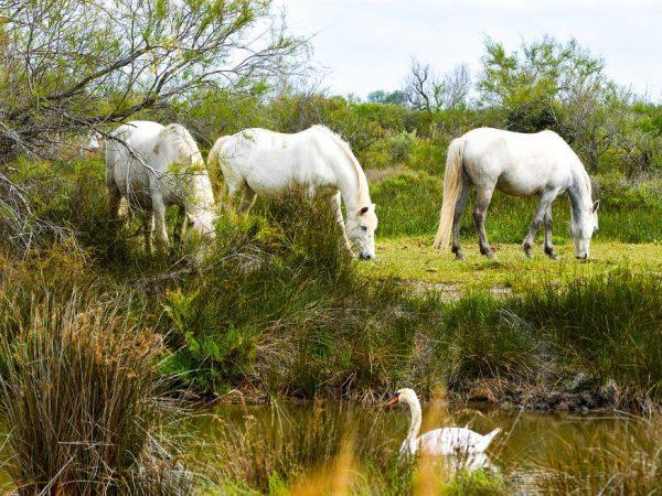 Терская порода лошадей