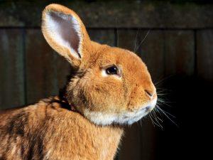 Мокрая мордочка у кролика