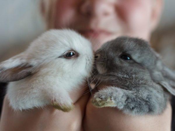 У кролика слезятся глаза