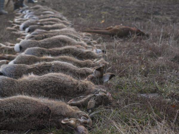 Почему умирают и дохнут кролики