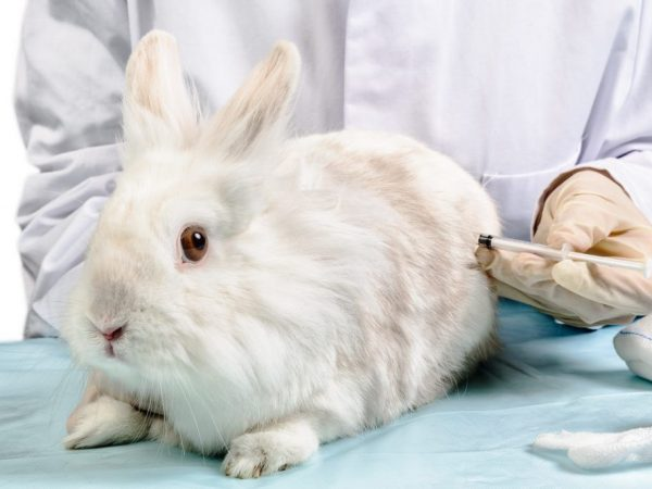 Когда и какие прививки нужно делать кроликам