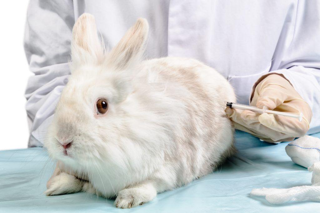 Какие прививки и когда нужно делать декоративным кроликам