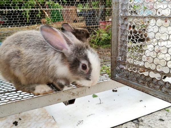 Плюсы разведения кроликов в вольерах