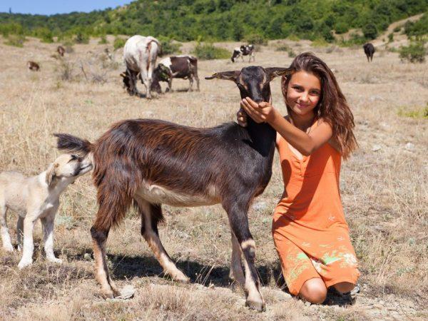 Внимательно следите за здоровьем козы