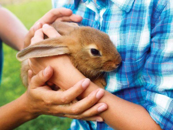 Правила по уходу за кроликами