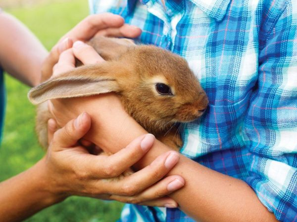 Кроликам требуется бережный уход