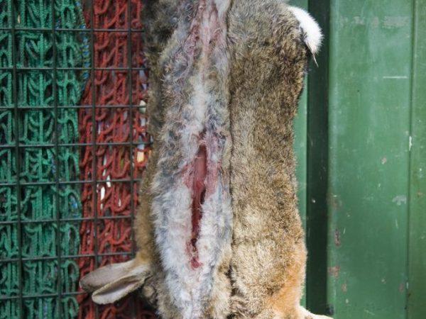 видео как убивают кролика