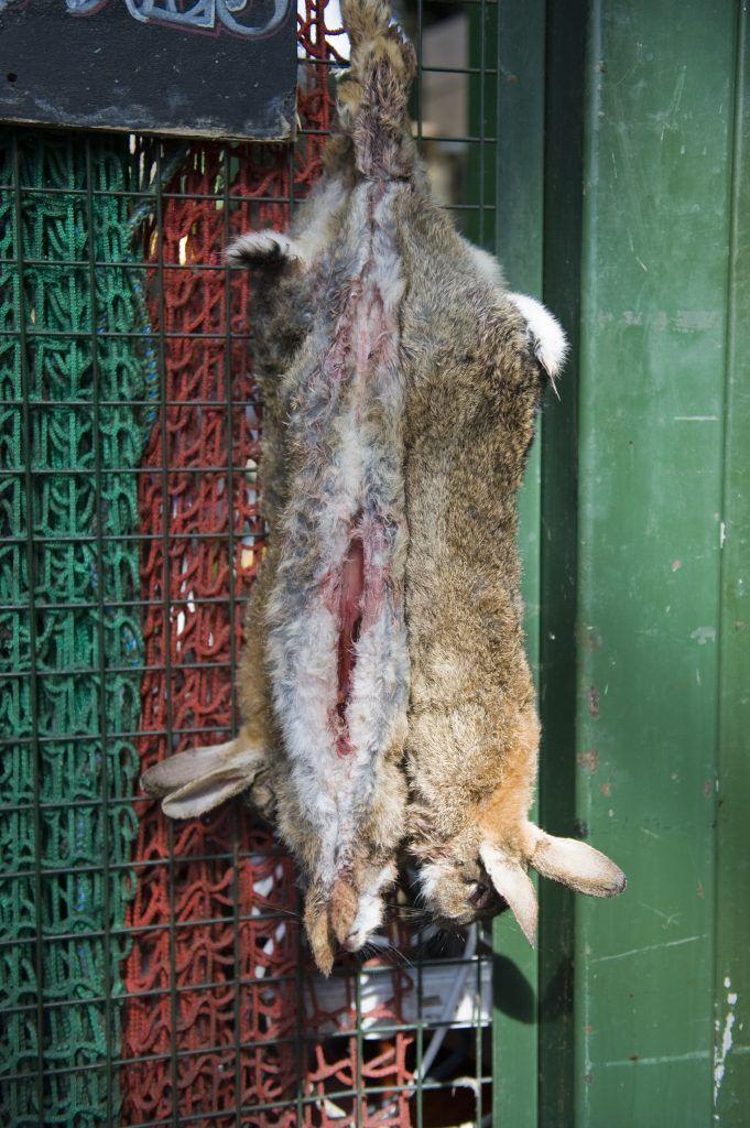 Как можно забить кролика