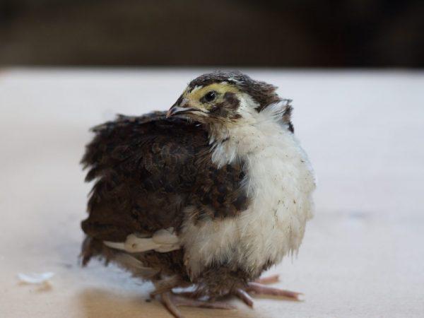 Следите за чистотой в птичнике