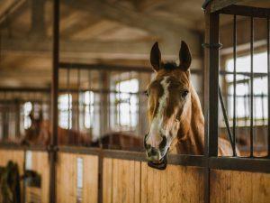 Постройка денника для лошадей