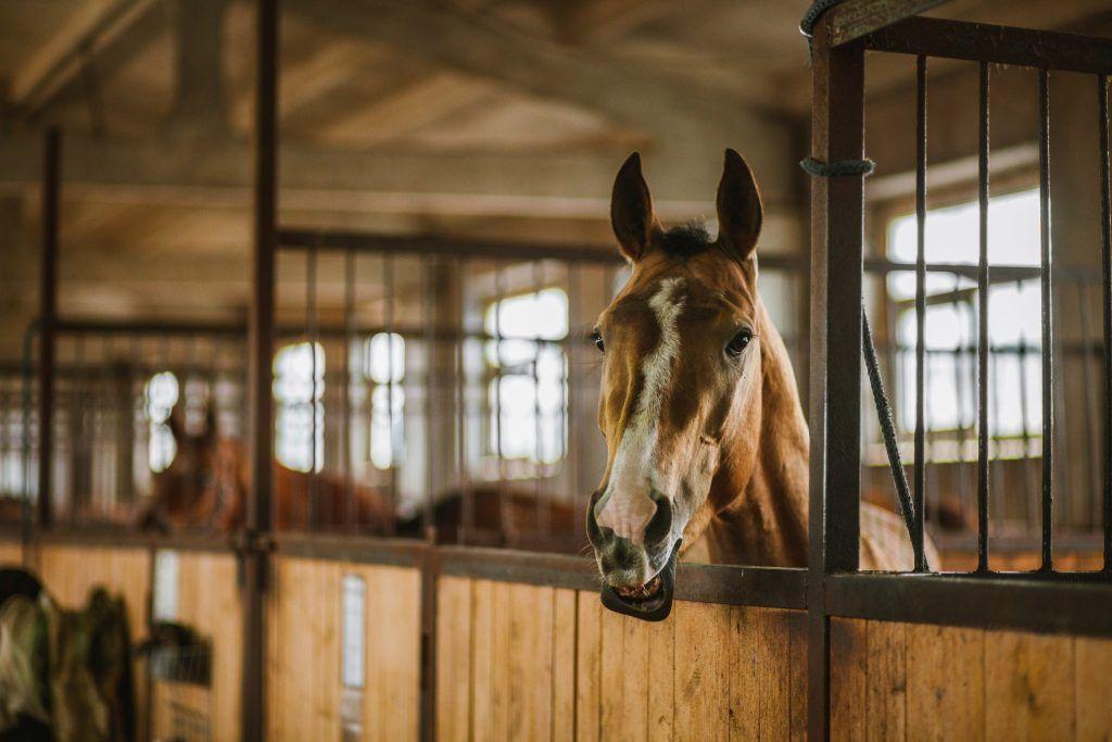 Стойло для лошади размеры строительство