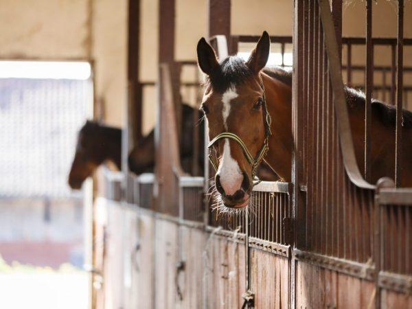 Лошадкам необходим контакт с сородичами