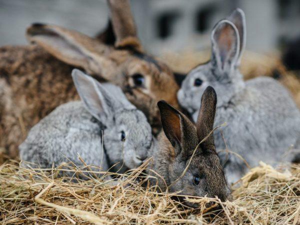 Мини-ферма для разведения кроликов