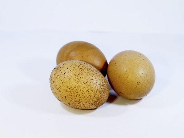 Яйца следует проверить на пригодность