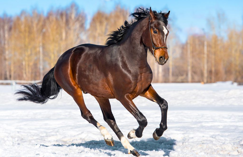 Сонник убитый конь