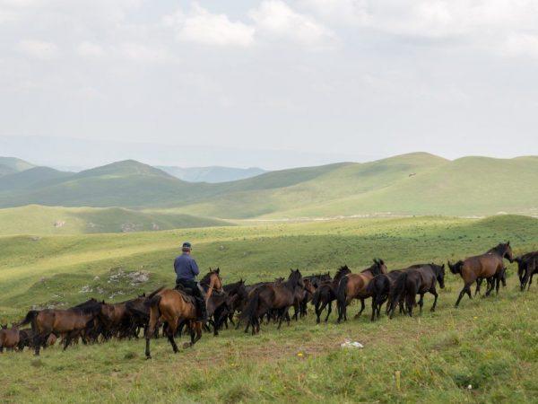 Характер лошадей