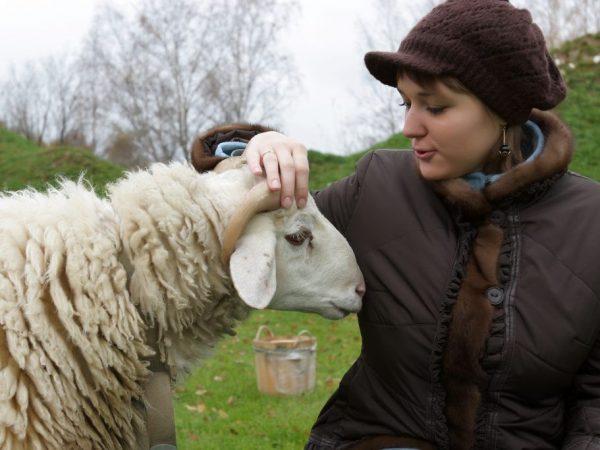 Выбор кличек для овец и баранов по внешности