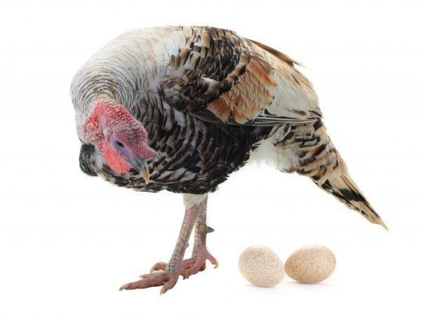 Поведение птиц подскажет о приближающемся брачном периоде