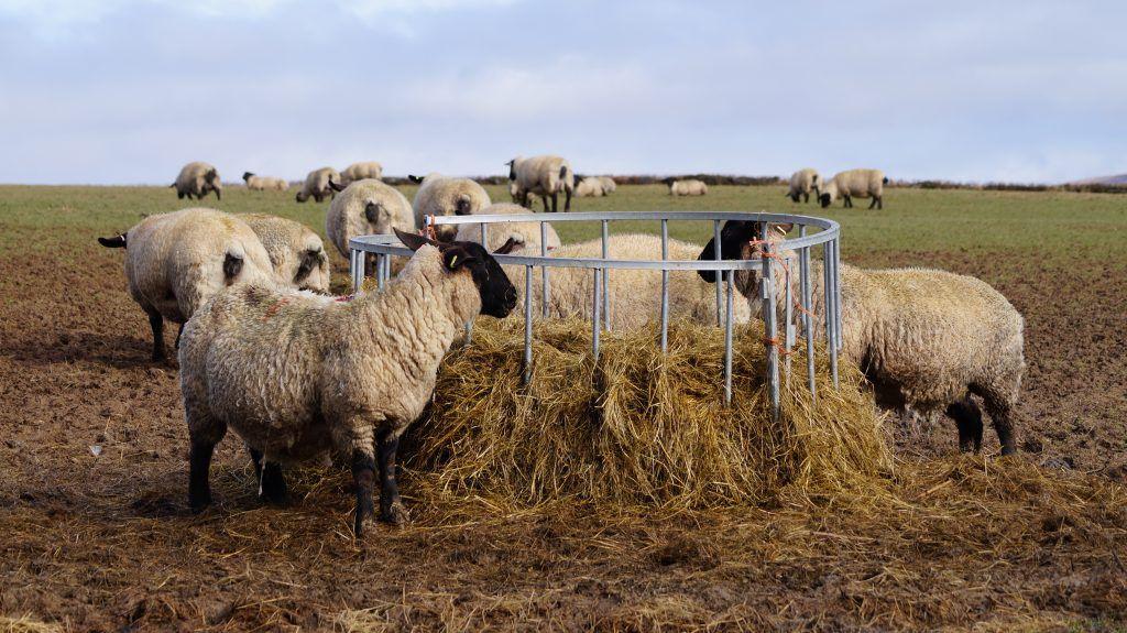 Кормушки для сена баранам