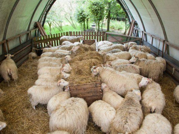 Внутреннее обустройство овчарни