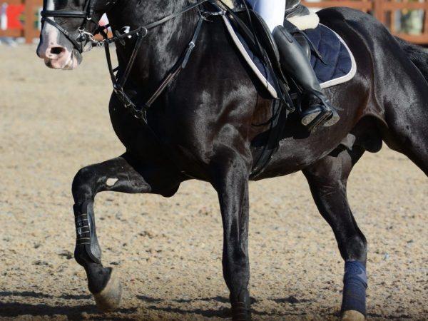 Разновидности лошадиного галопа