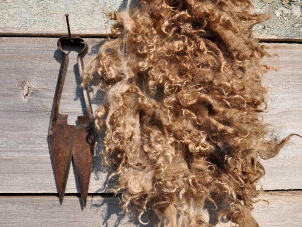 Одинарные ножницы для стрижки овец