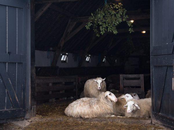 Строительство овчарни