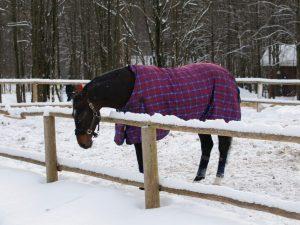 Разновидности попон для лошадей